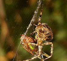 Spider and Prey by Gilberte