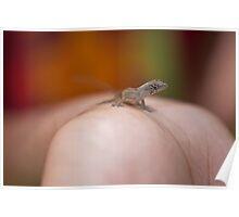 Cute little reptile Poster
