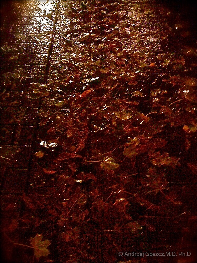 & & & & & & . Autumn Leaves  Autobiography (Les Feuilles Mortes. Dzi).Memories of those happy times when we were all together. Brown Sugar Storybook 2011. Favorites: 3 Views: 97 . Thx! by © Andrzej Goszcz,M.D. Ph.D