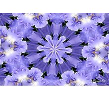 Irises Dance in a Fairy Ring Photographic Print