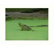 Gator No. 3 Art Print