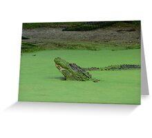 Gator No. 3 Greeting Card