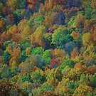 nature's palette by ANNABEL   S. ALENTON