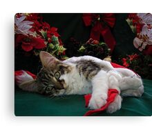 Cool Kitty Cat Lying on its Side Holding a Red Xmas Ribbon Dreaming of Christmas ~ Kitten Framed w Poinsettias Canvas Print