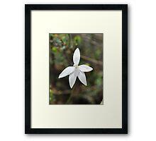 an albino Framed Print