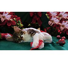 Christmas Maine Coon Kitty Cat w/ Big Eyes ~ Cute Feline Kitten w/ Paws Stretched Waiting for Santa Claus on Xmas Eve Photographic Print