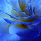 BLUE MYSTERY ROSE by RoseMarie747
