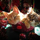 Christmas Basket of Two Kittens in Love ~ Portraits of Kitty Cats in Xmas Scenery w/ Pine Cones, Red Baubles & Poinsettias by Chantal PhotoPix