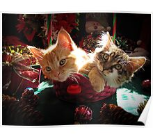 Christmas Basket of Two Kittens in Love ~ Portraits of Kitty Cats in Xmas Scenery w/ Pine Cones, Red Baubles & Poinsettias Poster
