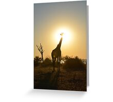 Giraffe in the sunset Greeting Card
