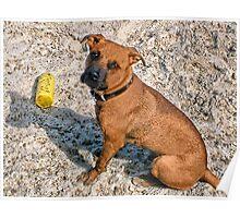 """。◕‿◕。 ☀ ツ """"Yes Thats My Toy, Im Enjoying A Day At The Beach Wanna Play""""??。◕‿◕。 ☀ ツ Poster"""