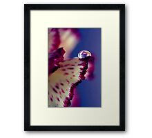 Colour Of Life XXXII [Print & iPad Case] Framed Print