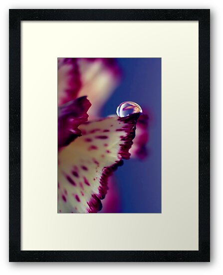 Colour Of Life XXXII [Print & iPad Case] by Damienne Bingham