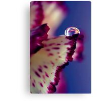 Colour Of Life XXXII [Print & iPad Case] Canvas Print