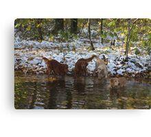 Surprise SnowStorm Golden Retriever Joy Canvas Print