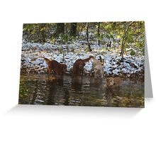 Surprise SnowStorm Golden Retriever Joy Greeting Card