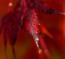 Seasons Change by TeresaB