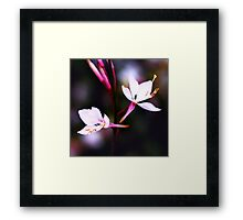 Colour Of Life XVII Framed Print