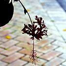 Sidewalk Bloom by dez7