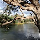 Murray River Albury-Wodonga VIC by OzNatureshots