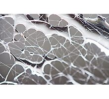 Spider Web Photographic Print