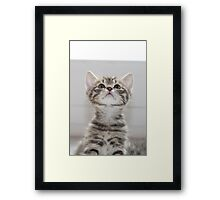 Can I have some more? Framed Print