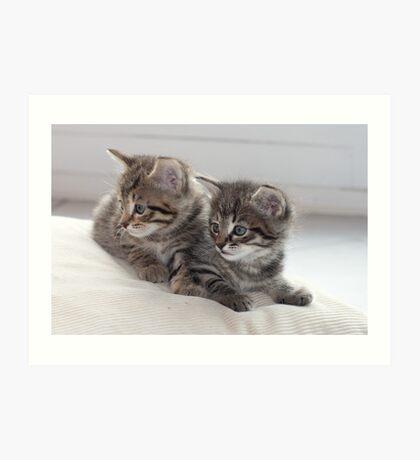 Sweet Kittens Art Print