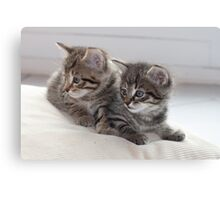 Sweet Kittens Canvas Print