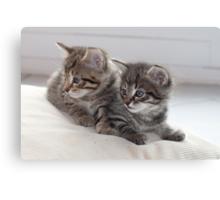Sweet Kittens Canvas Print