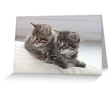 Sweet Kittens Greeting Card