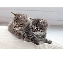 Sweet Kittens Photographic Print