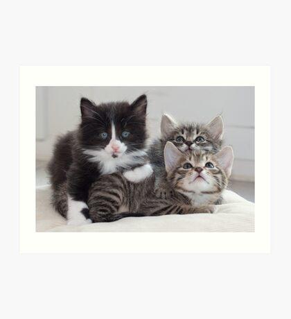 3 Kittens Art Print