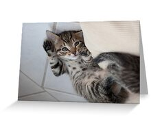 Little Kitten Greeting Card