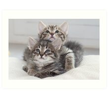 Two Kitten Art Print