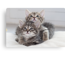 Two Kitten Canvas Print