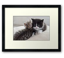 Sad Kitten Framed Print