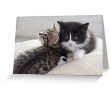 Sad Kitten Greeting Card