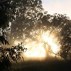 Sunrise - Albury NSW by OzNatureshots
