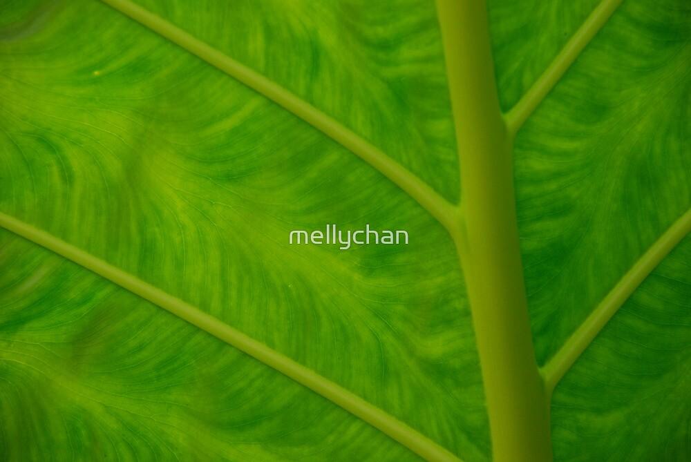 leaf by mellychan