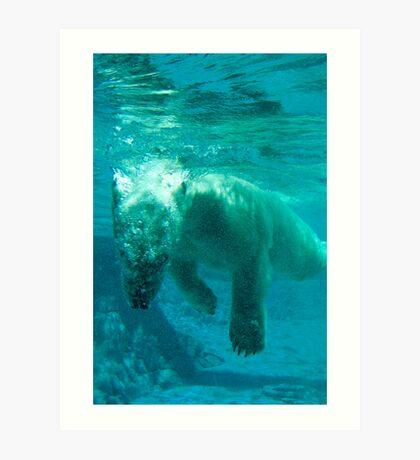 Polar Bears Underwater  Art Print