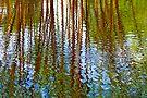 Pond Patterns by Renee Hubbard Fine Art Photography