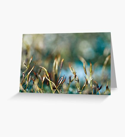 Abstract from Nature Greeting Card