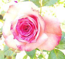 Narrabri's best roses by Rebekah Kilpatrick