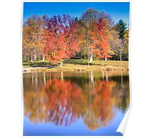 Sodalis Nature Park Maple Tree Poster