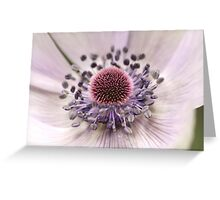 Dreamy white anemone Greeting Card