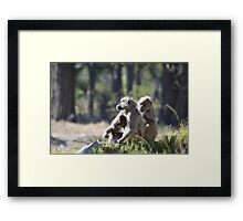 Caring for each other Framed Print