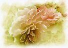 Roses  by Elaine  Manley