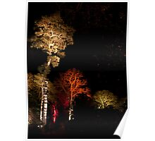 Westonbirt Arboretum Night Poster