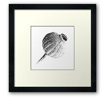 Poppy Head 02 Framed Print