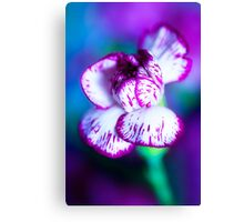 Colour Of Life XII [Print & iPad Case] Canvas Print